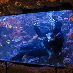 Обслуживание морских аквариумов